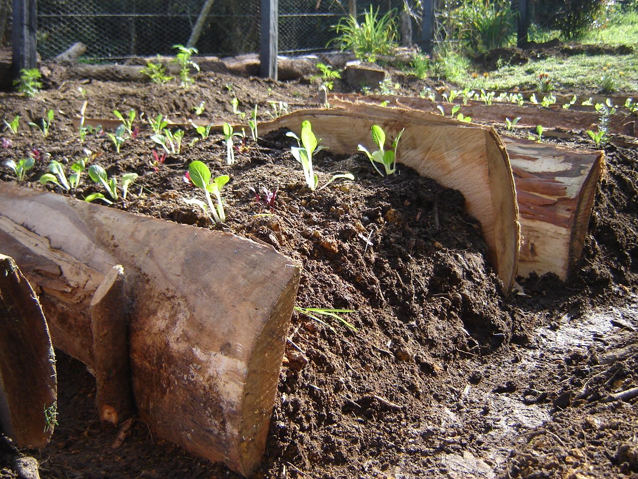 Menos cosas m s felicidad la huerta org nica la casita for Plantas para huerta organica