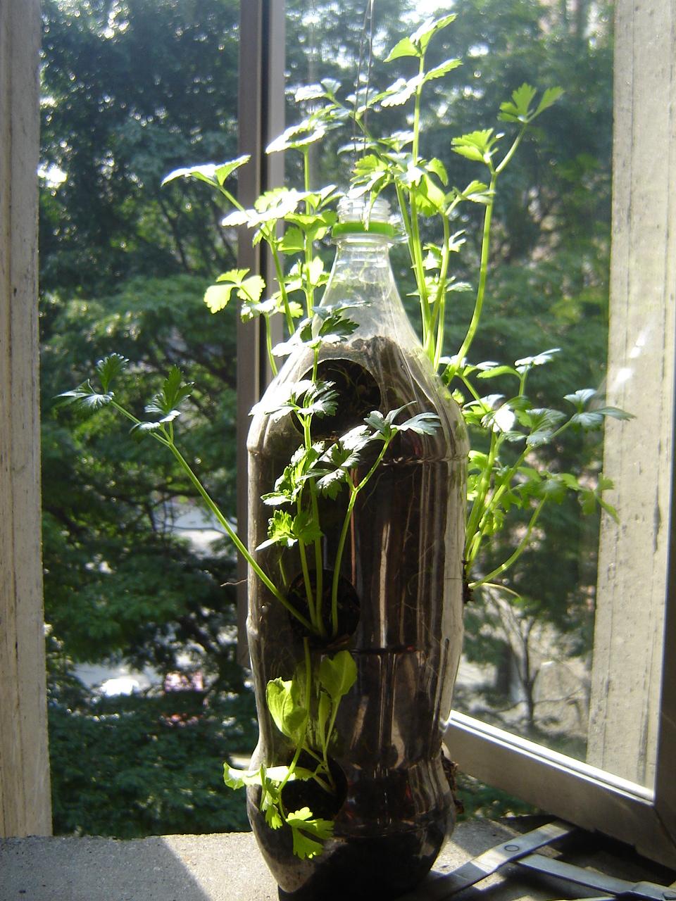 Menos cosas m s felicidad huerta en casa la casita de for Plantas para huerta organica