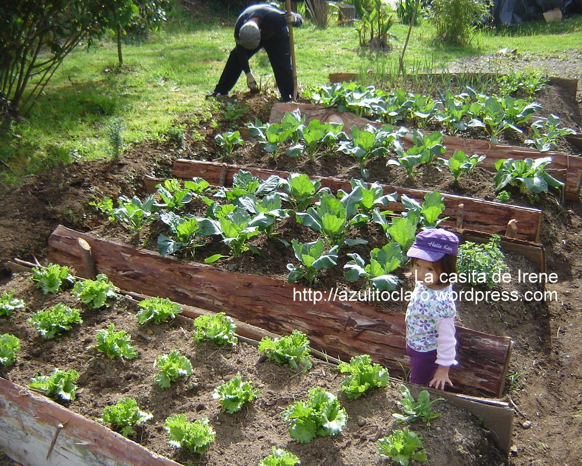 Huerta la casita de irene for Alelopatia en hortalizas