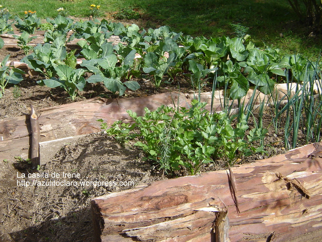 Huerta org nica la casita de irene for Plantas para huerta organica